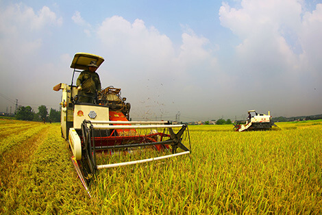 Rice Harvester Drive